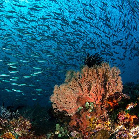 Best Destination for Scuba Diving Komodo