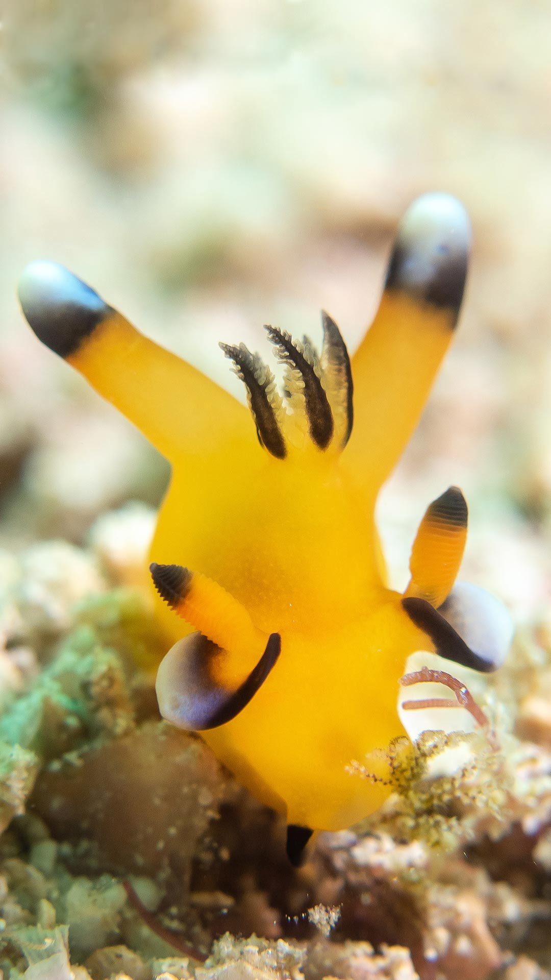 Best Dive Sites and Snorkeling Spots in komodo