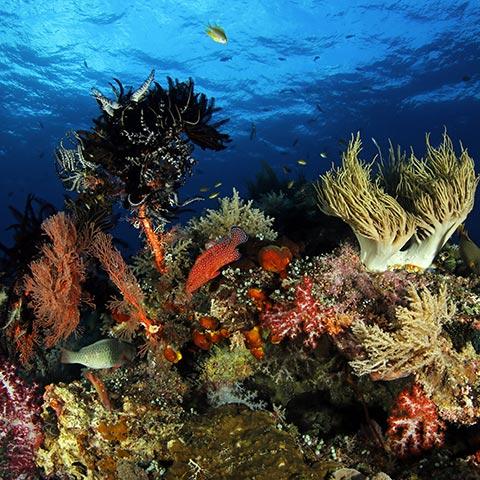 Best Snorkeling Spots in Raja Ampat