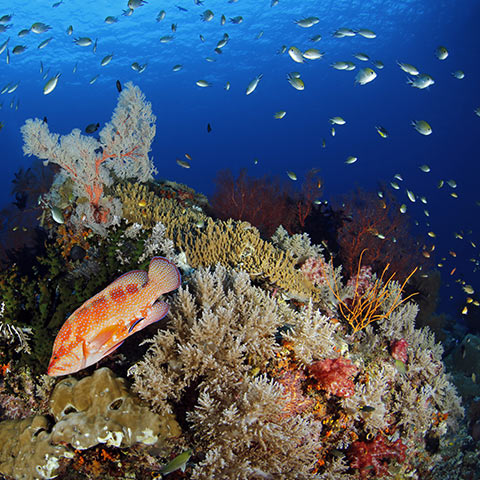 Colorful Reef Corals in Misool