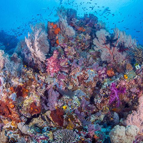 Colorful Soft and Hard Coral Raja Ampat