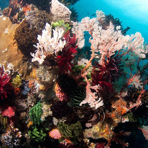 Wonderful Corals in Batu Bolong Komodo