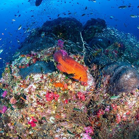 Dive Site Komodo Castle Rock