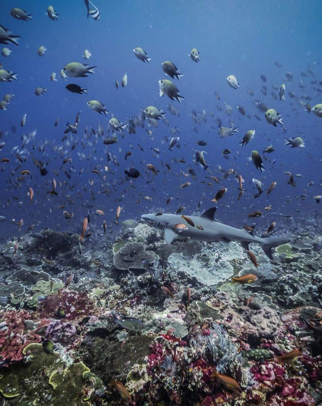 Dive Site Komodo Crystal Rock