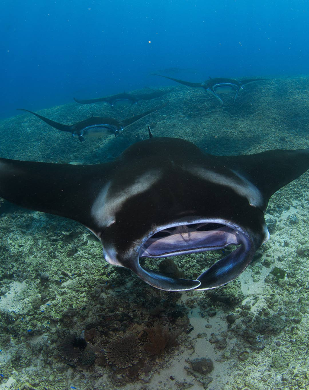 Dive Site Komodo Manta Point Makassar Reef
