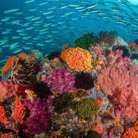 Dive Site Melissa