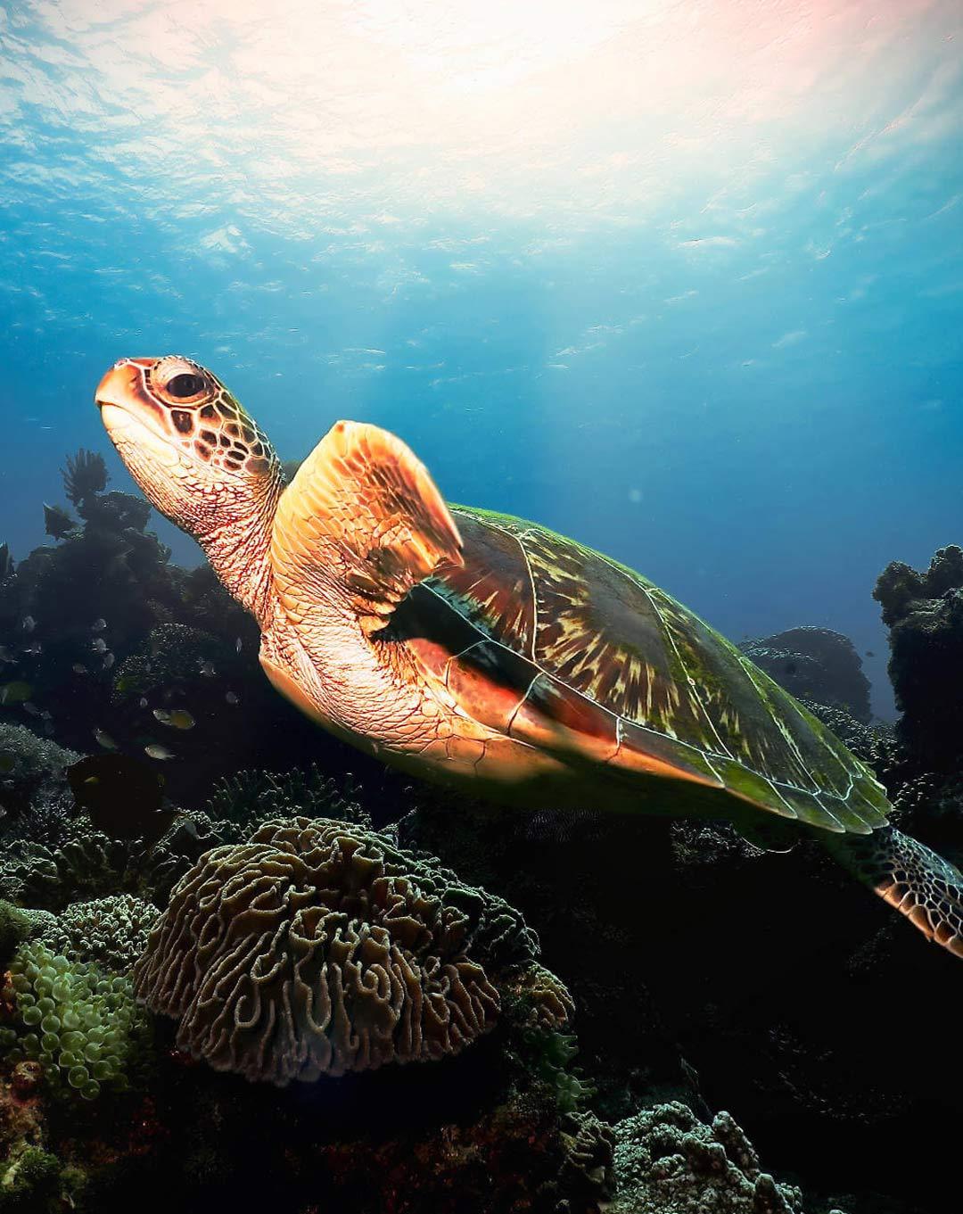 Dive Site Siaba Besar Turtle City Komodo