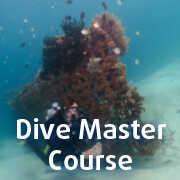 Dive Master Course in Menjangan Marine Park
