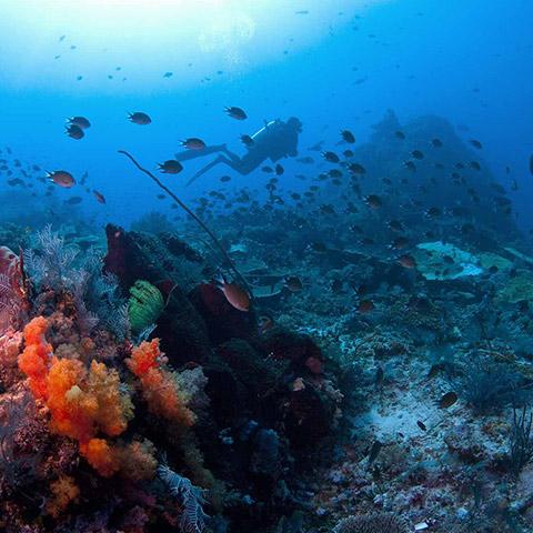 Drift Diving in Crystal Rock Komodo