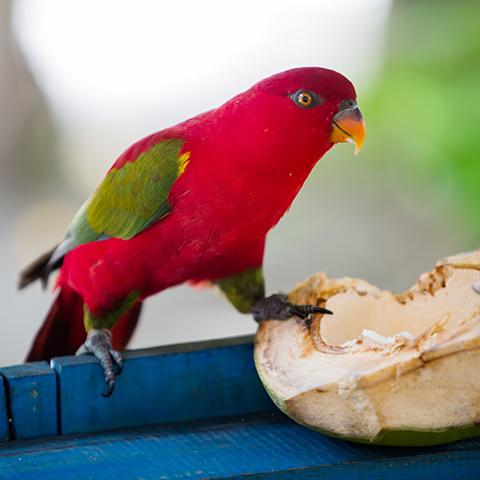 Incredible Birds Sighting in Raja Ampat