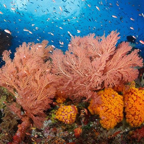 Kaleidoscope Colorful Reef