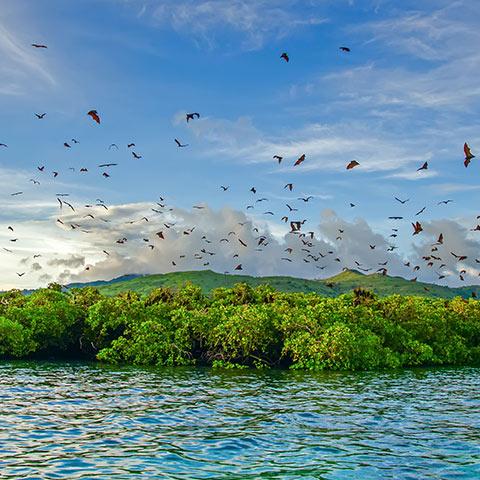 Kalong Flying Foxes Pulau Kalong