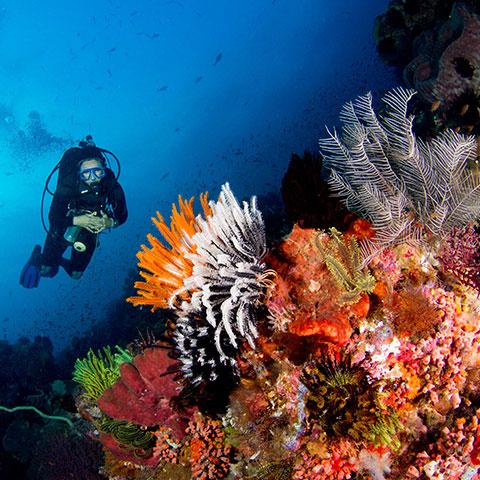 Komodo Diving Experience
