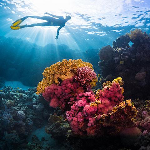 Komodo Island Snorkeling