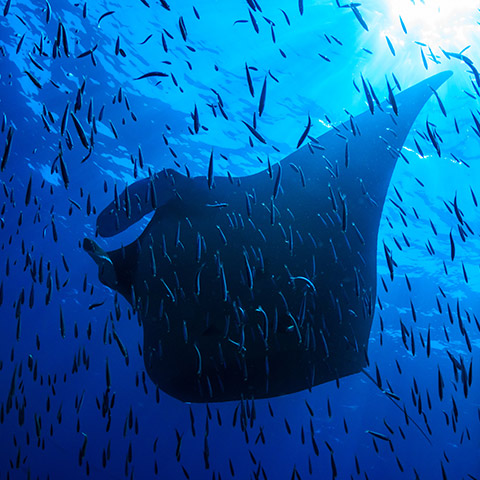 Manta Sandy Cleaning Station