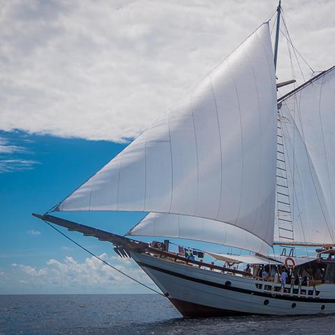 Raja Ampat Best Dive Sites Cruise