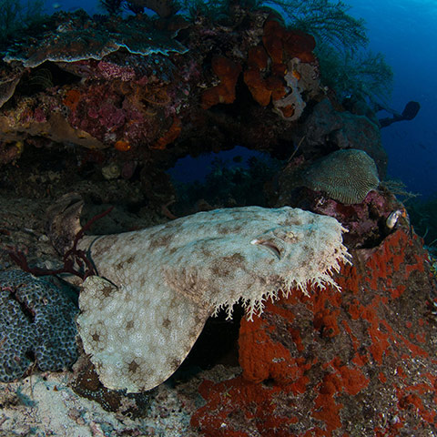Raja Ampat Best Dive Sites