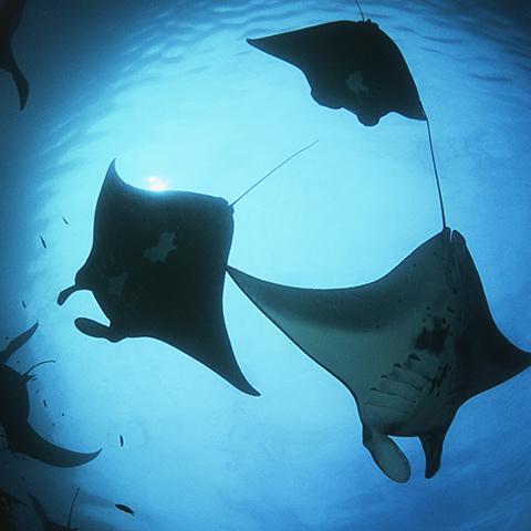 Raja Ampat Best Snorkeling Sites