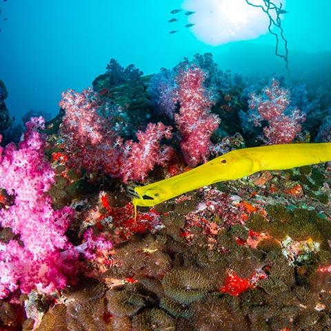 Raja Ampat Snorkeling Biodiversity