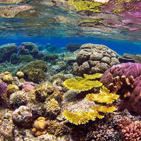 Raja Ampat Snorkeling Spots