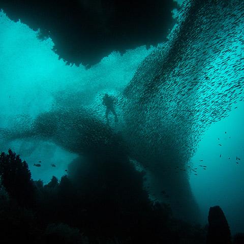 Raja Ampat Ultimate Diving Experience