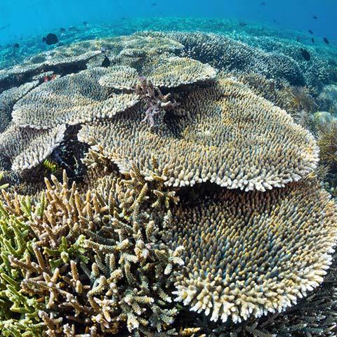 Sebayur Islands Coral Garden
