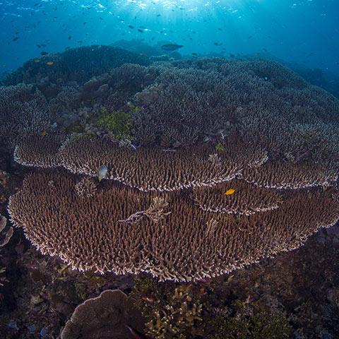 Siaba Kecil Reef