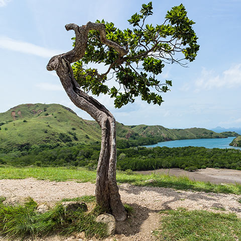Rinca Island the most preserved Island of Komodo