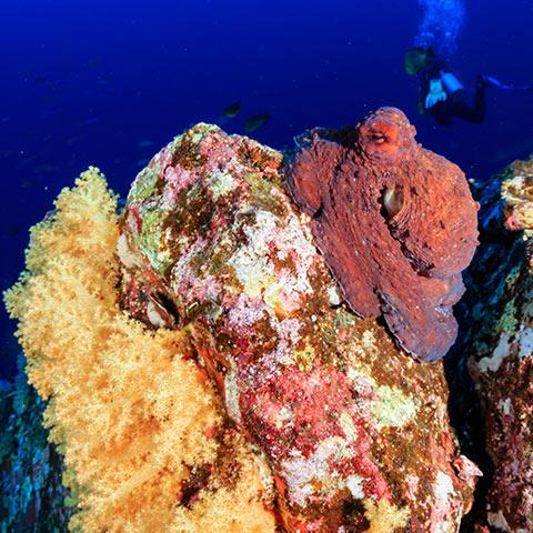 Underwater Photographer Paradise