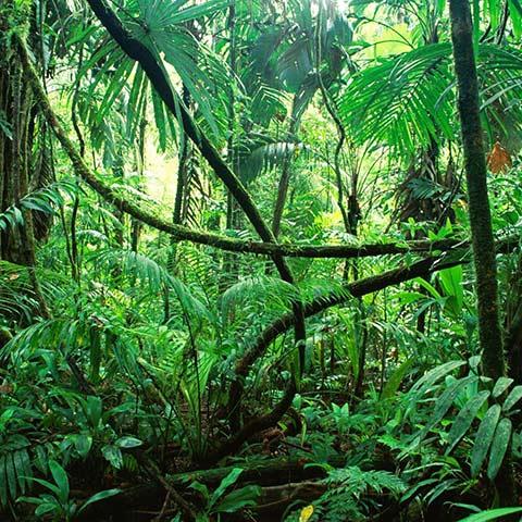 Waigeo Tropical Lush Forest
