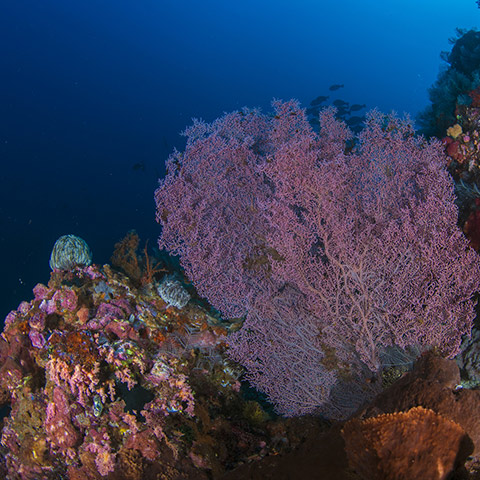 Wall Full of Corals